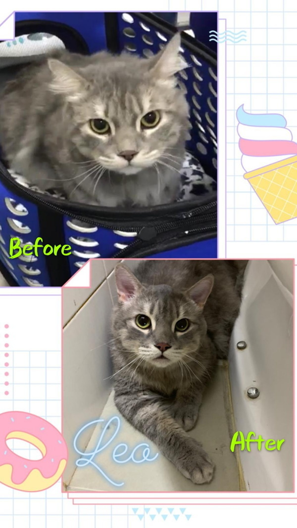 before and after cat grooming 1