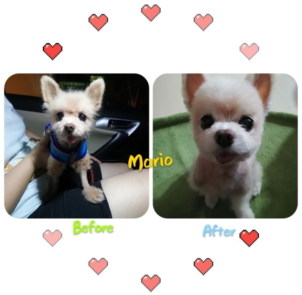 before and after dog grooming 1