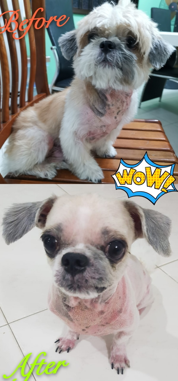 before and after dog grooming 3