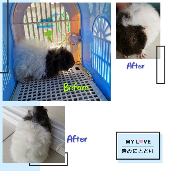 before and after pet grooming 1