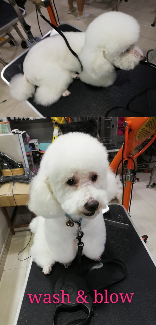 before and after dog grooming 4